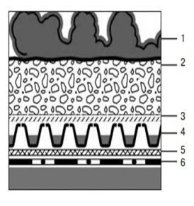 Кровельный пирог системы Ковер из седумов